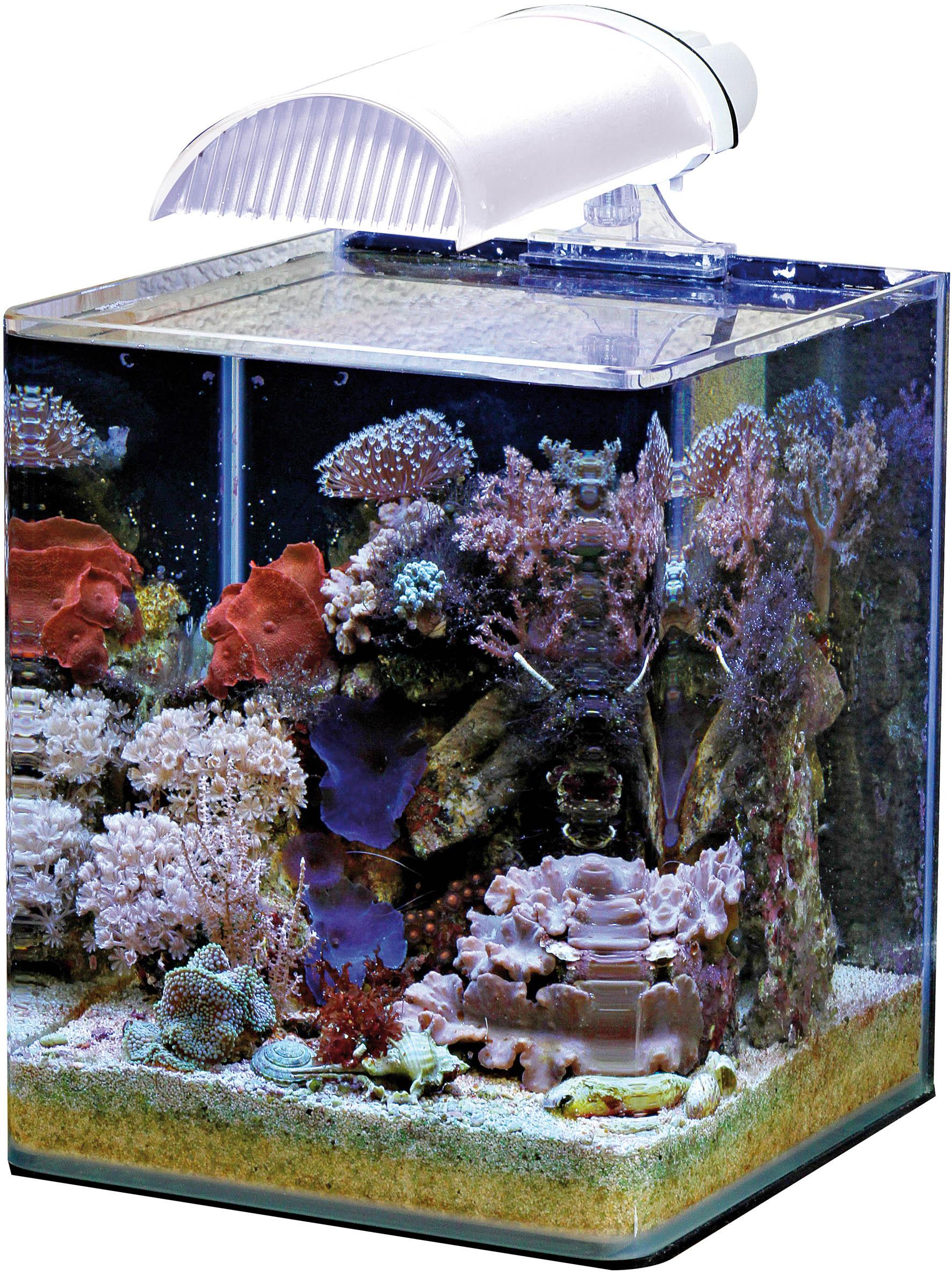 F r schnorcheln im wohnzimmer hilgerlicious luxus ist for Salzwasser aquarium fische