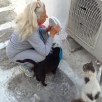 Die Katzenlady von Mykonos