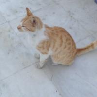 Die Katzen von Mykonos