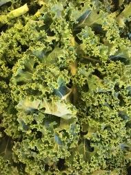Vom Feld auf den Tisch: allerfrischestes Gemüse