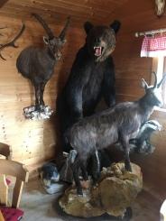 in der Bärenstube steht ein echter Bär