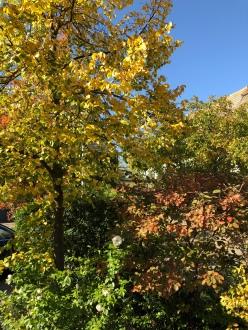 Herbstpracht im Schlosspark