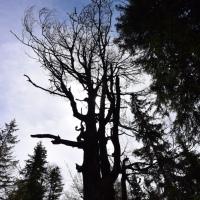 Kufsteiner Land: Kräuterwandern im Kaisergebirge (und Alpakakontent)